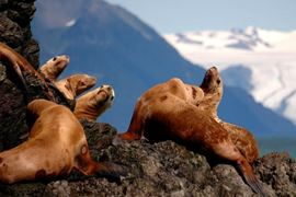 Princess Cruises Alaska - Island Princess Excursions - Seals
